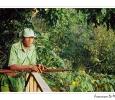 guardia parco protezione gorilla di pianura parco nazionale foresta di lobeke riserva wwf protezione camerun