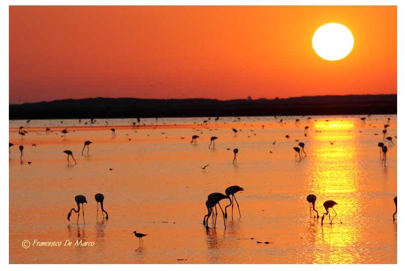 camargue tramonto saline_52